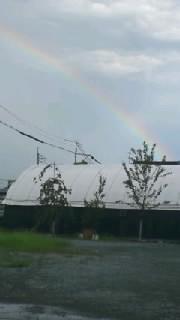 昨日の虹.jpg